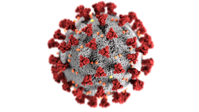 'New Virus Strain Not Found in Japan' – Kato